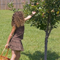 Ripe for the Picking: A Great Way to Spend Family Time