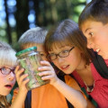Summer Camp Health Tips – a Pediatrician's Point of View