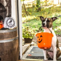 Halloween, Kids and Pets …Ensure a Fun Holiday For All: Part II