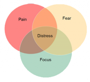 Pain Fear and Focus
