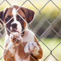 Play-Dates: Making Sure Other Children Are Safe With Your Dog