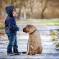 """Teaching Your """"Very Friendly"""" Child How to Meet a Strange Dog"""