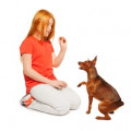 Building a Child's Confidence Through Dog Training