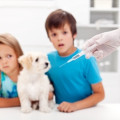 How Can Regular Vet Visits Help Keep Your Kids Safe Too? Part1