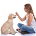 How to Keep Kids From Getting Bit Helping with Dog Training