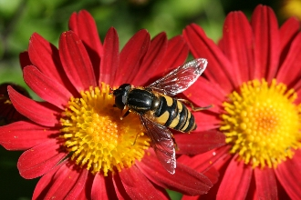 Treating a bee sting