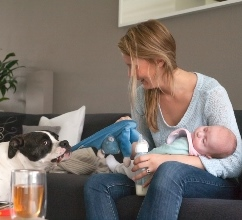 Safely Introduce Your Dog to Your New Baby
