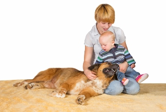 Your New Baby Safely Met Your Dog … Now What???