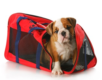 How To Travel Safely For The Holidays With Pets AND Kids